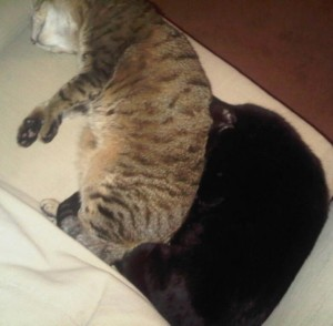 Tiggy and Ozzy Cuddling